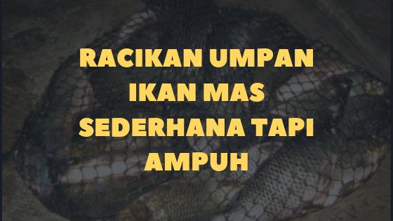 Umpan Ikan Mas Sederhana Tapi AMPUH (Murah Meriah)
